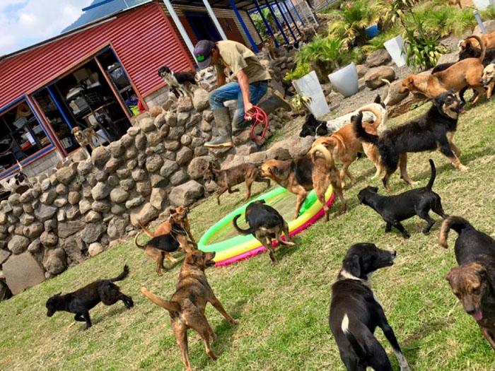 Perros en el paraíso de los perros