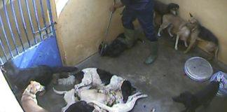 Perros están siendo inyectados con productos de limpieza
