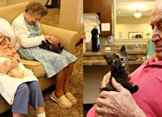 Refugio animal y un geriátrico se unieron para alegrar a gatos y ancianos
