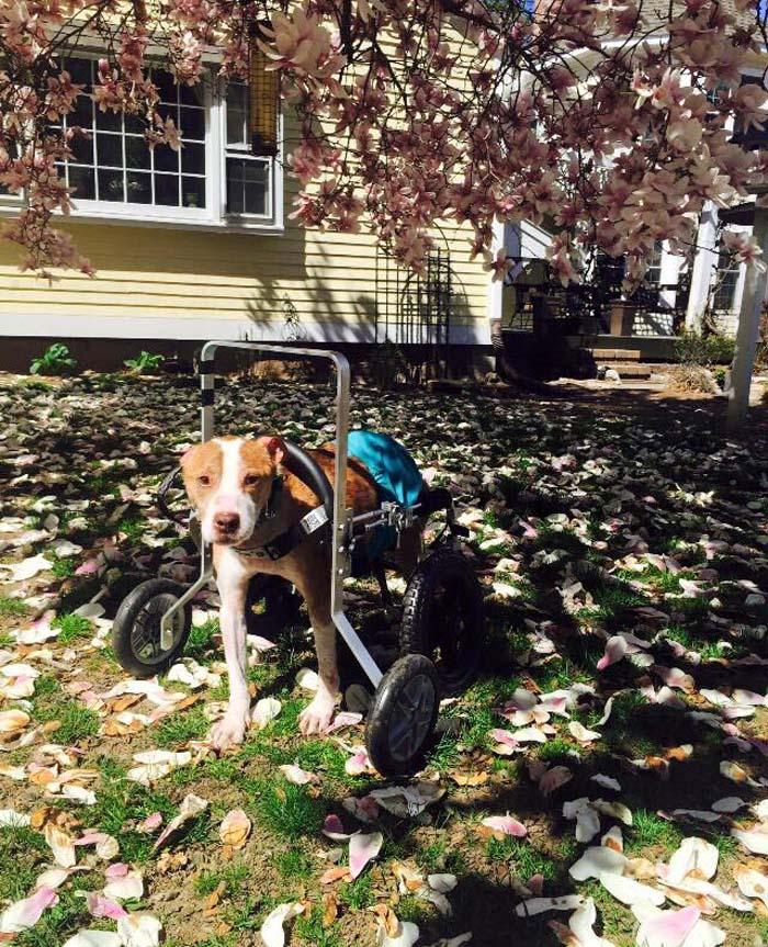 Rudy y su silla de ruedas