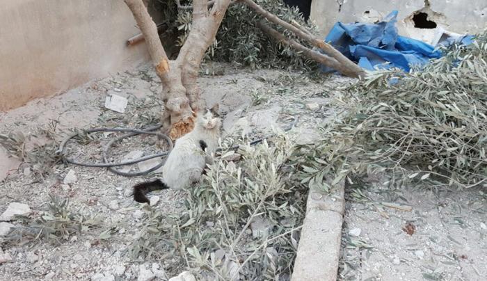 Santuario destruído por bombardeo