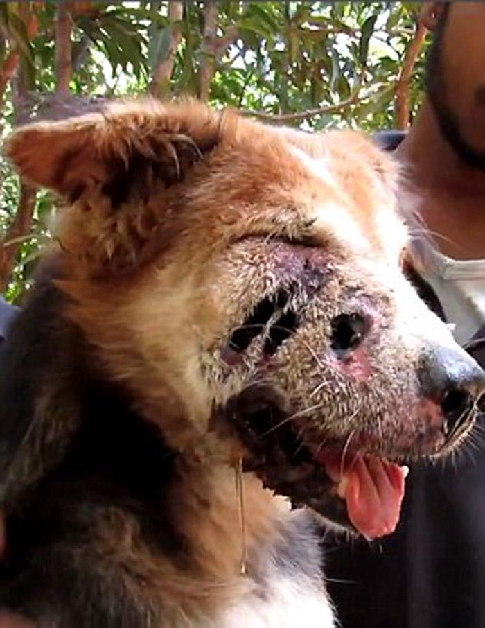 Teddy Bear estaba siendo devorado por gusanos