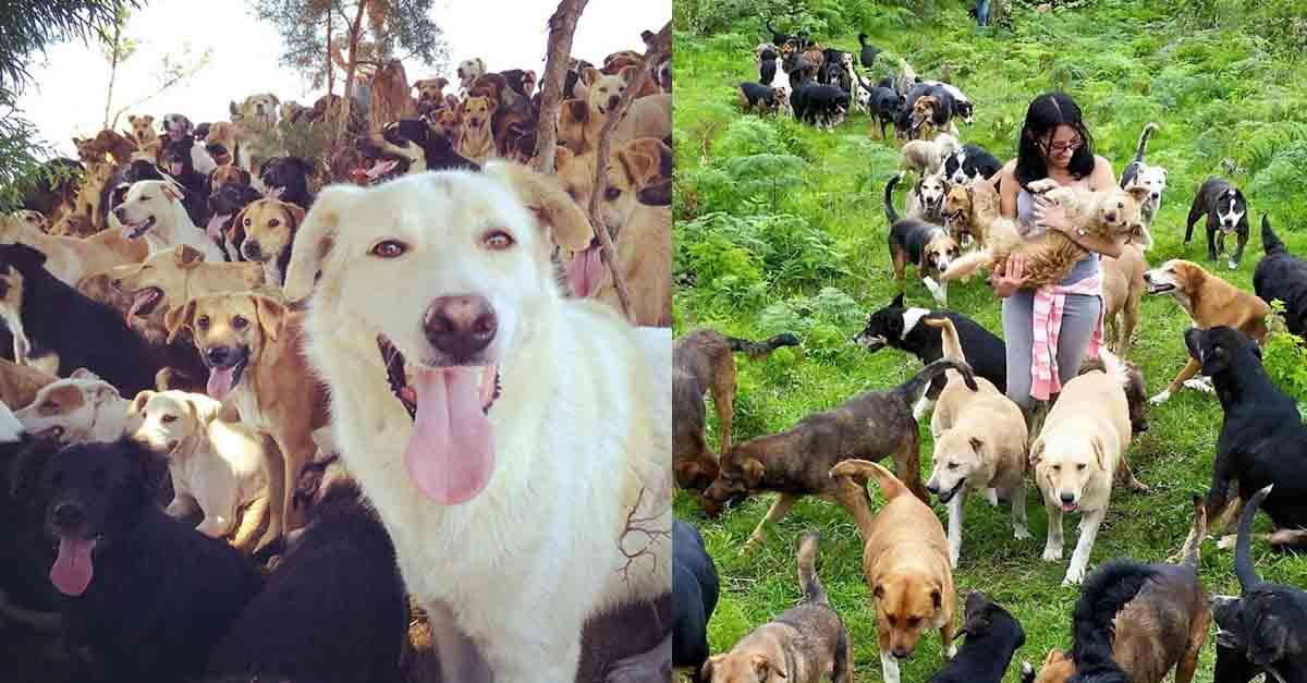 Territorio de Zaguate en Costa Rica es considerado el paraíso de los perros