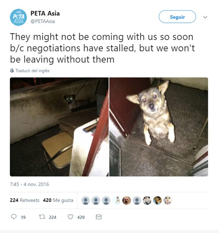 Twitter PETA