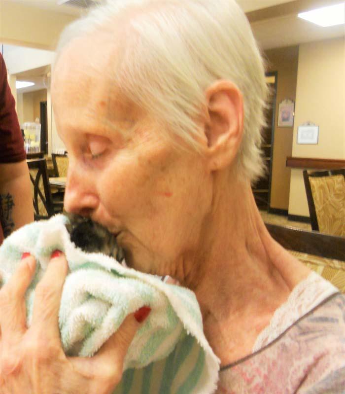 Verdadero amor entre gatos y ancianos