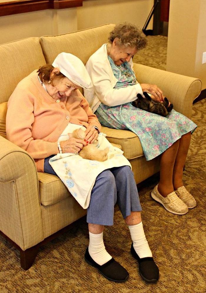 Ancianas cuidando a unos gatos