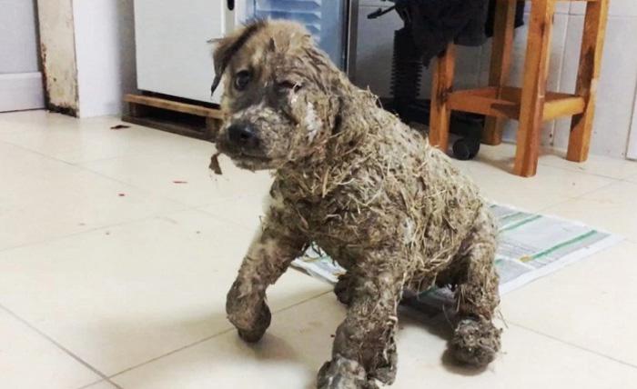 Este perro fue cubierto con pegamento.