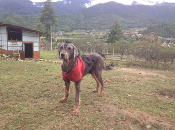 Perro con sarna cronica