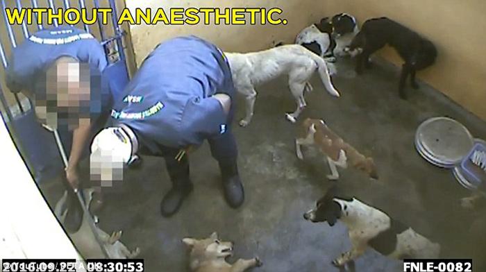 Perro están siendo inyectados