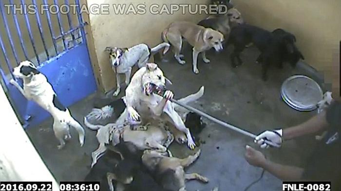 Perros están siendo asesinados en la Isla Mauricio
