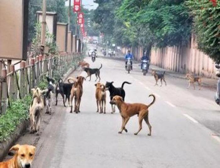 Perros sin hogar