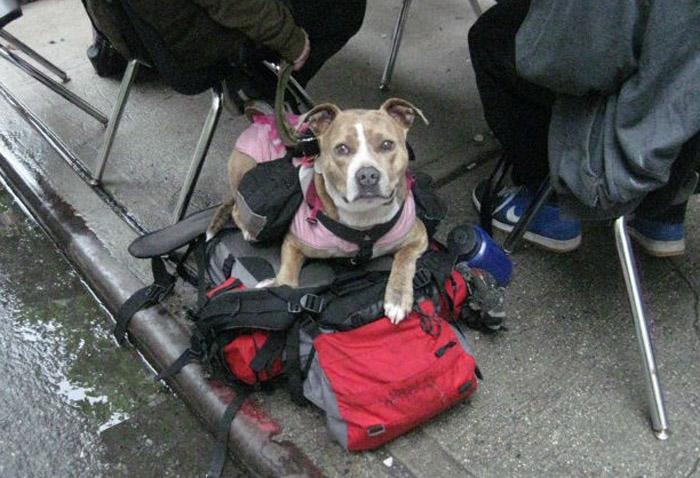 Refugio cuida a perros sin hogar