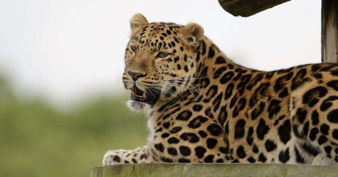 Animales Carnívoros, curiosidades, características y ejemplos