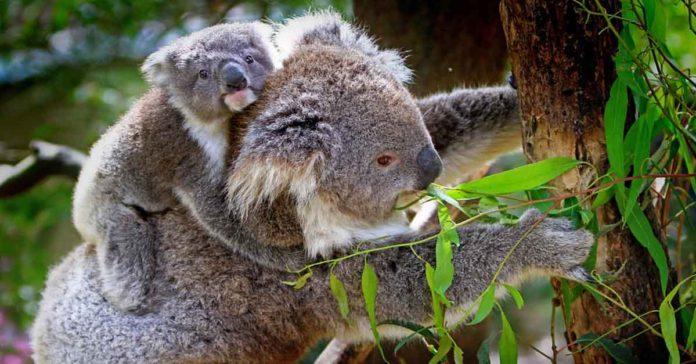 Animales Herbívoros - Curiosodades, características y ejemplos