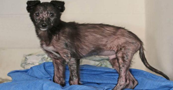 Cachorro estuvo a punto de morir congelado, pero fue rescatado a tiempo