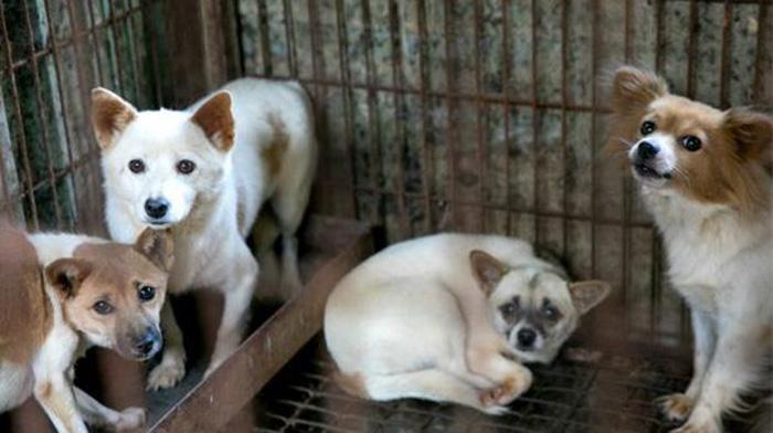 Carne de perro en Corea del Sur