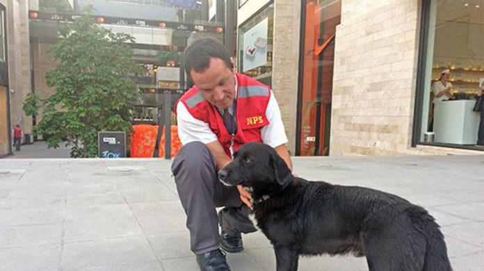 Centro comercial da hogar temporal a perros rescatados