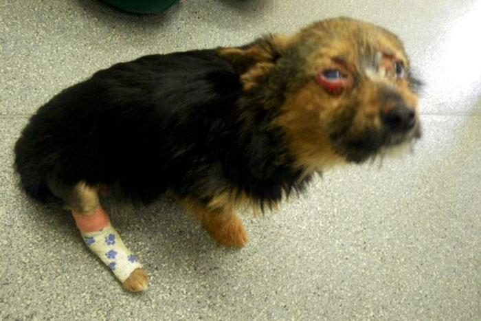 Chunky fue brutalmente torturado