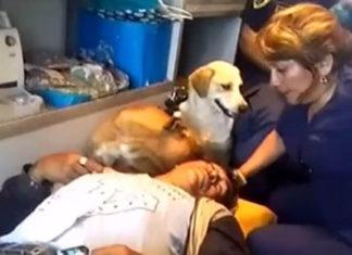 Dos perros acompañaron a su padre humano herido hasta el hospital