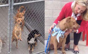 Esta bondadosa mujer cubrirá los gastos de adopción de un refugio animal