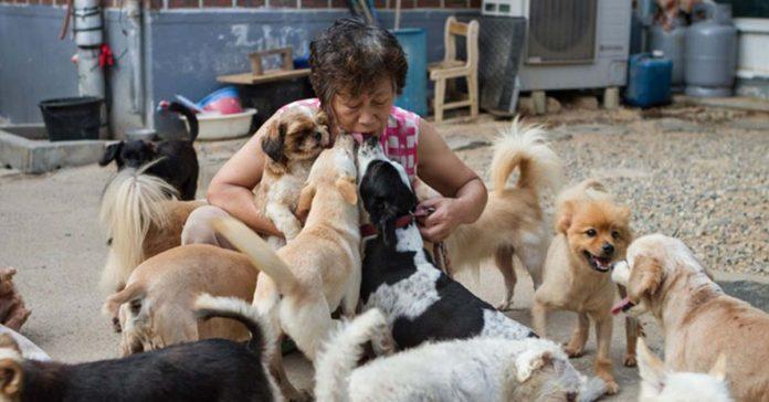 Esta bondadosa mujer salva a perros sin hogar en Corea del Sur