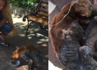 Esta mujer ayudó a un perro sin hogar que todos hacían a un lado