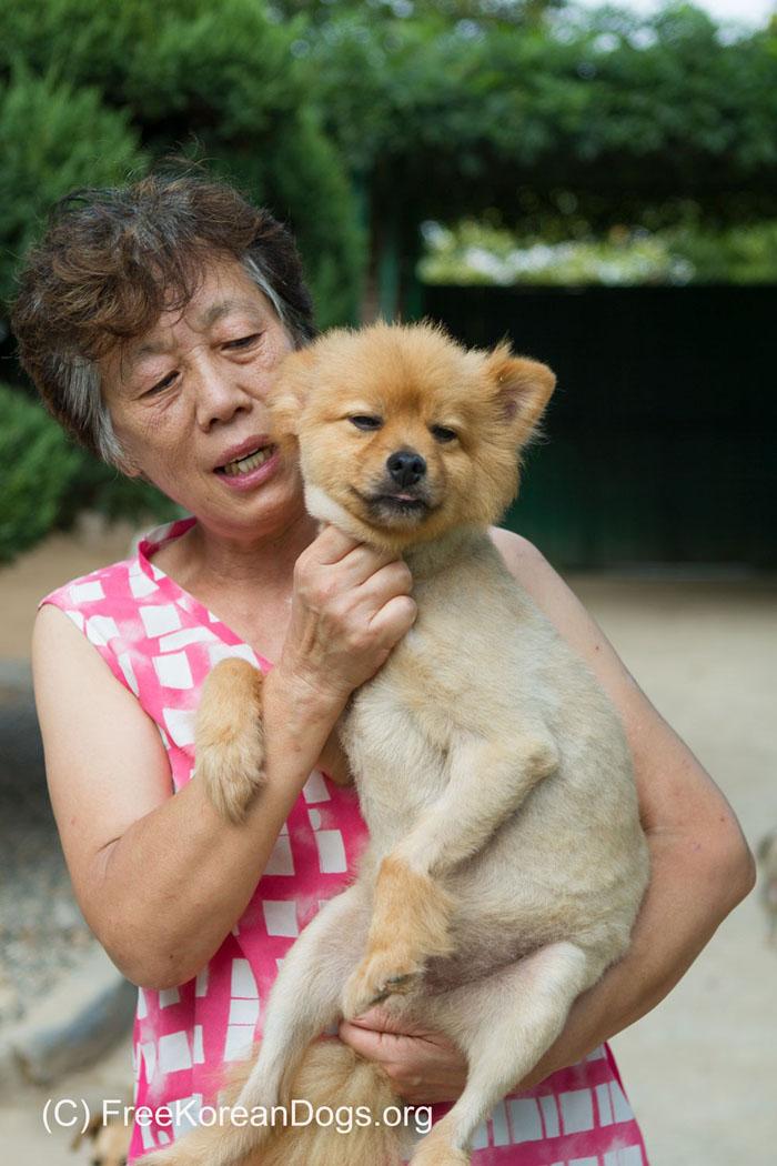 Esta mujer salva a perros sin hogar en Corea del Sur