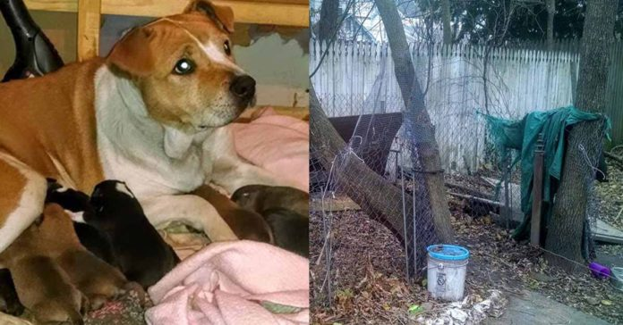 Esta perra embarazada fue abandonada por sus humanos