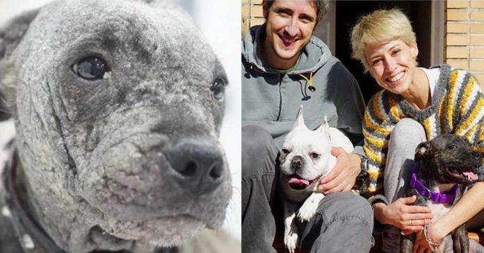 Esta perra fue abandonada en el desierto, pero fue rescatada y es feliz
