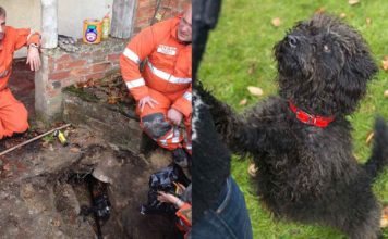 Esta perra fue rescatada tras haberse quedado atrapada en un túnel