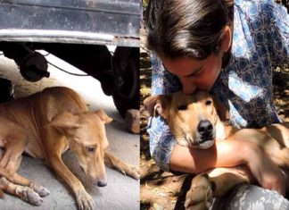 Esta perra tenía un tumor canceroso, pero logró recuperarse y es muy feliz