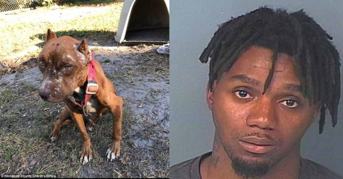 Esta perra tuvo que comerse a sus cachorros para poder sobrevivir