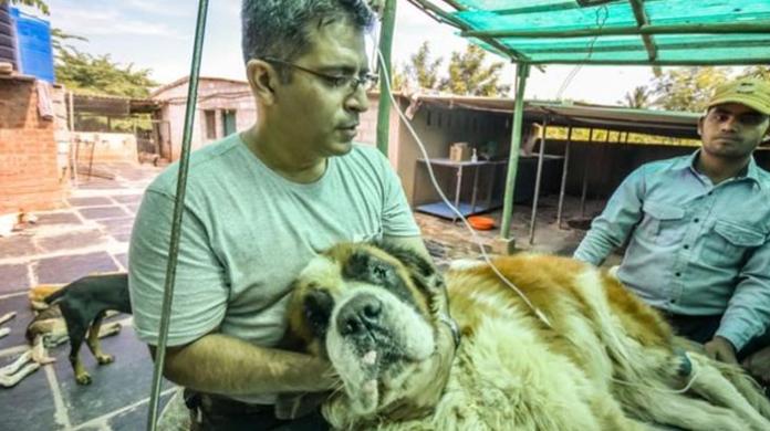 Este hombre creó un santuario para perros