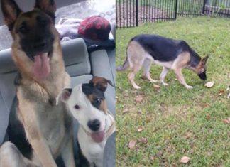 Este par de perras fueron echadas de su hogar como si fueran basura