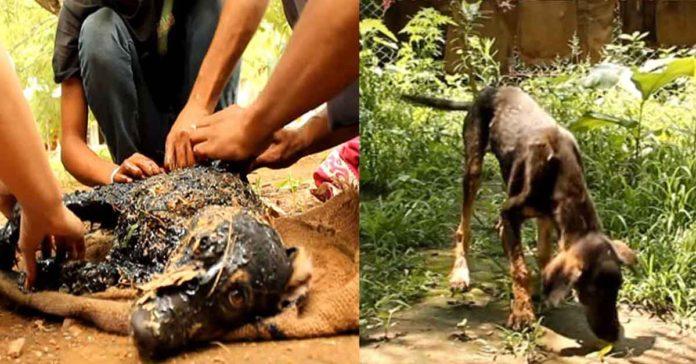 Este perro cayó en alquitrán caliente, pero fue rescatado y está a salvo