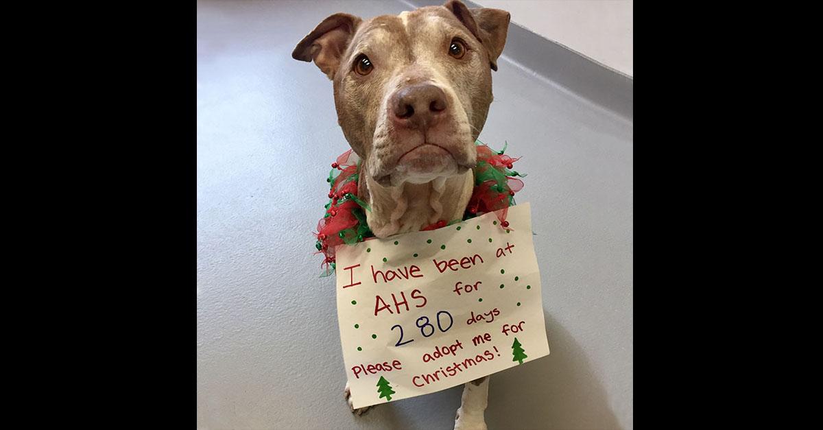 Este perro deseaba encontrar un hogar en esta navidad y fue adoptado