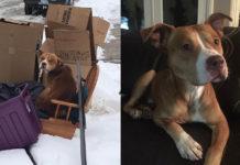 Este perro fue abandonado con la basura por su supuesta familia