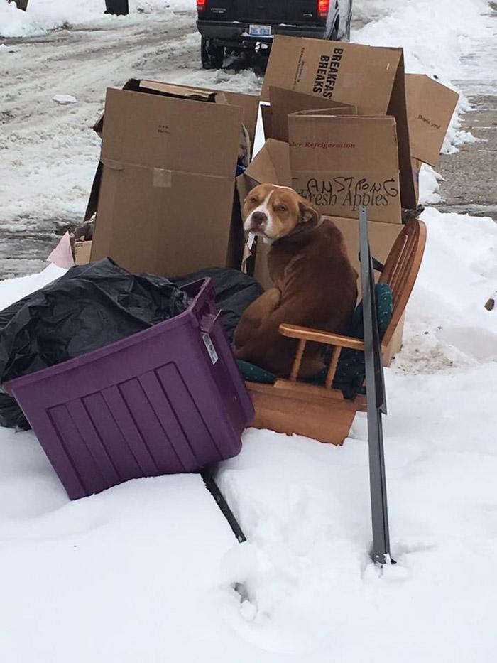 Este perro fue abandonado con la basura