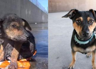 Este perro fue arrojado al canal de un rio despues de que le amputaron una pata