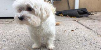 Este perro fue dejado en un refugio siete veces por una misma familia