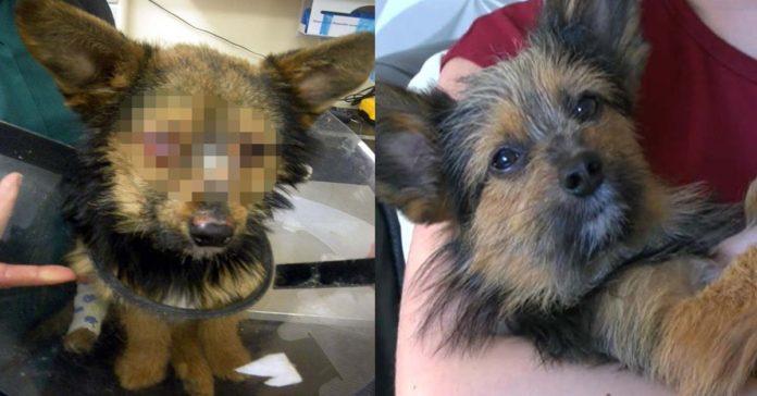 Este perro fue torturado por un grupo de adolescentes drogados