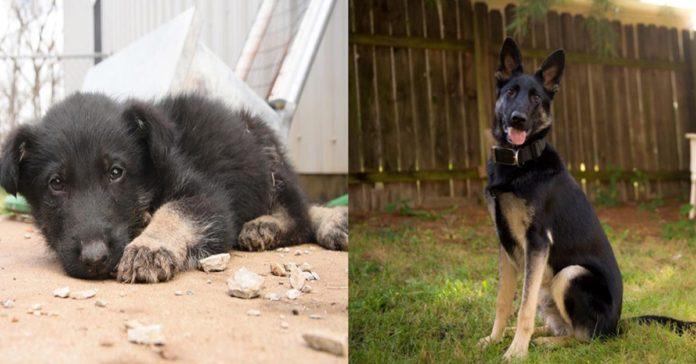 Este perro se arrastró para poder que sus rescatistas lo vieran y ayudaran