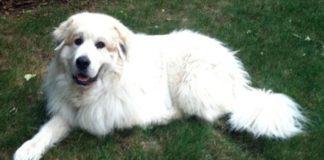 Este perro fue usado como blanco de tiro