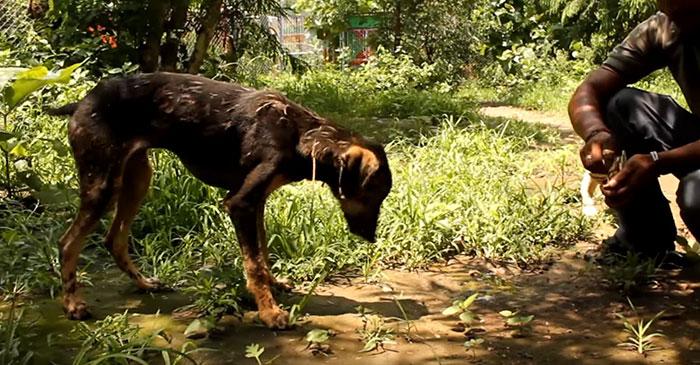 Este perro tenía su cuerpo cubierto de asfalto