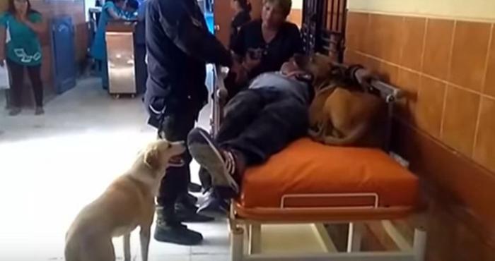 Estos perros demostraron su fidelidad y amor hacia su padre humano