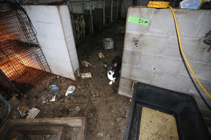 Estos perros vivían en terribles condiciones