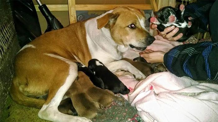 Harley tuvo a ocho preciosos cachorros