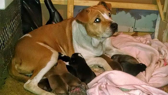 Harley y sus cachorros
