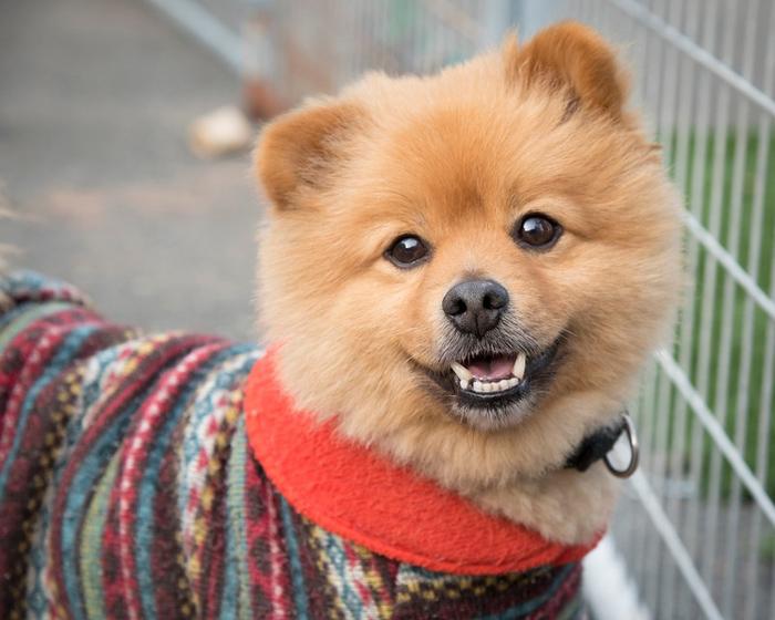 Hermoso perro