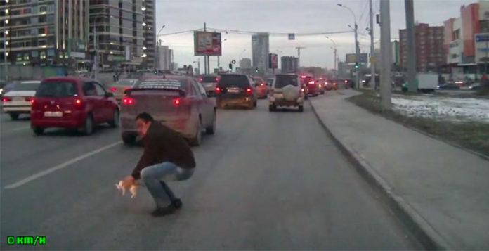 Hombre detiene el tráfico para salvar a un gatito
